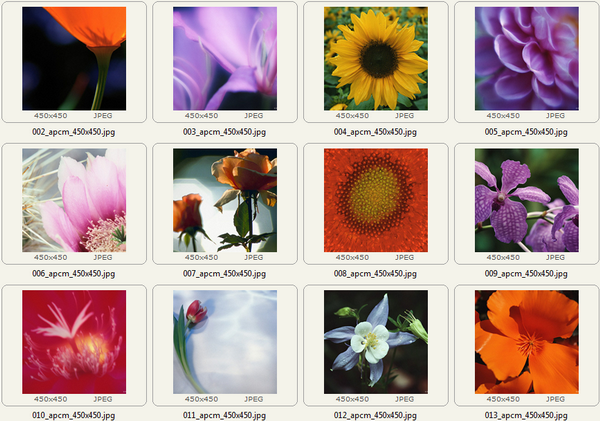 Exemples d'images dans l'archive