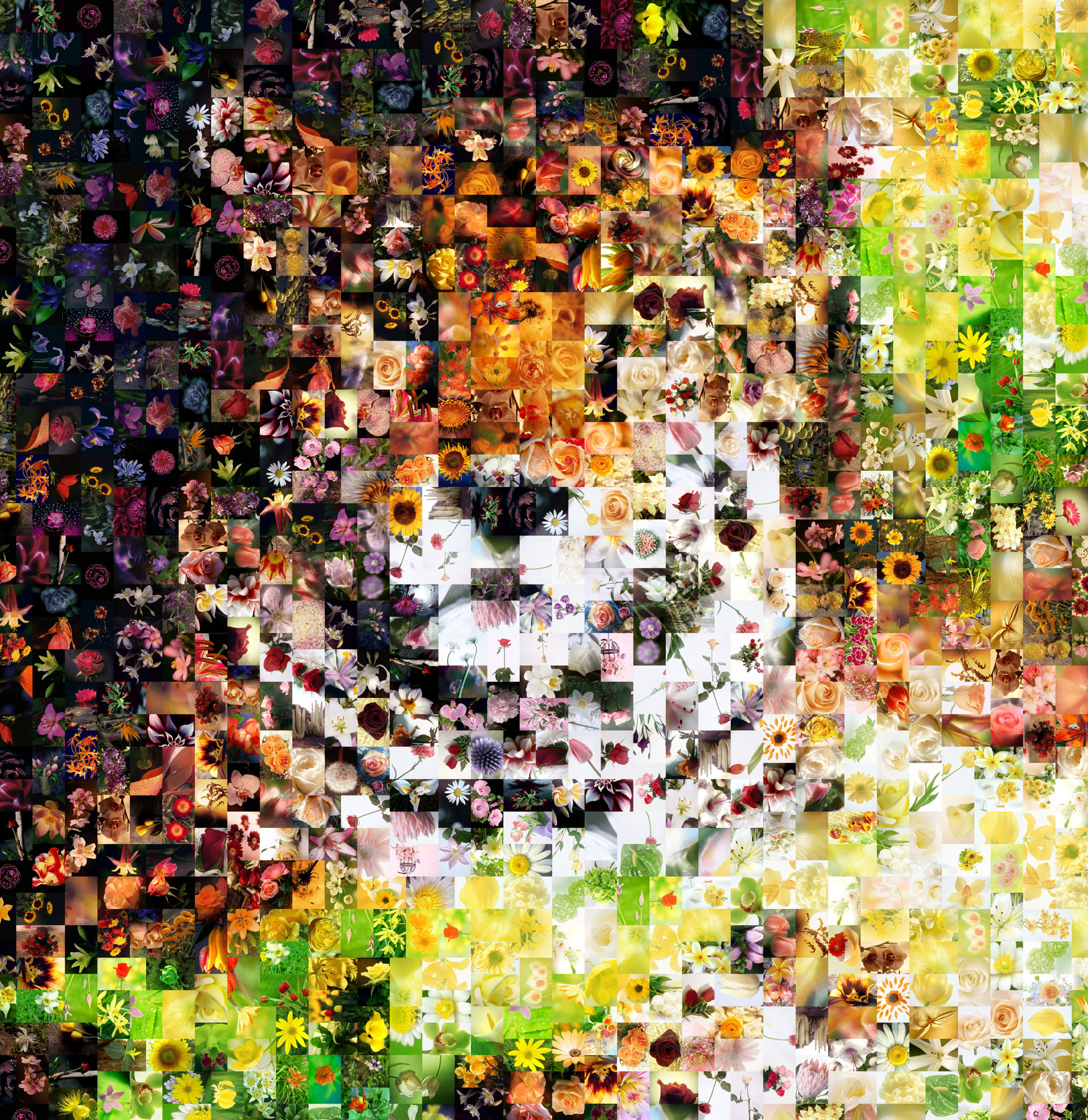 800 Pieces Lion Photomosaic Created Using The Program Artensoft Photo Mosaic Wizard And Cell Image Base With Flowers Download Full Size Extra Large
