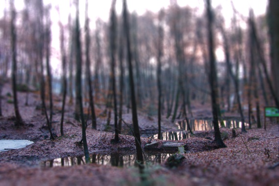 tilt-shift software